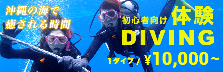 exprience diving